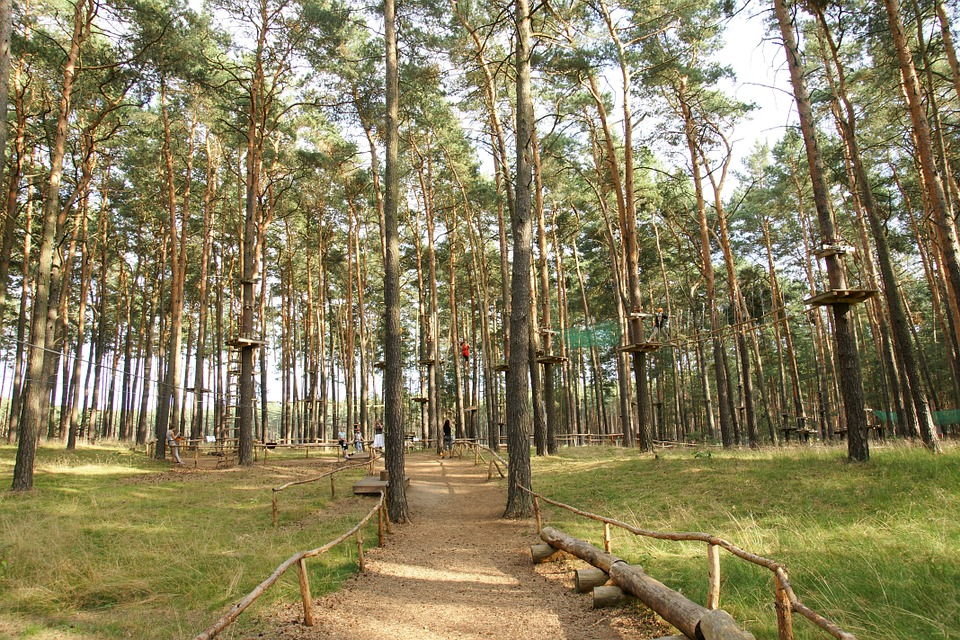 00木登りclimbing-park-812306_960_720