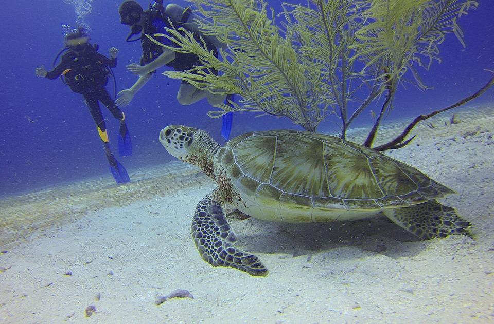 turtle-588497_960_720